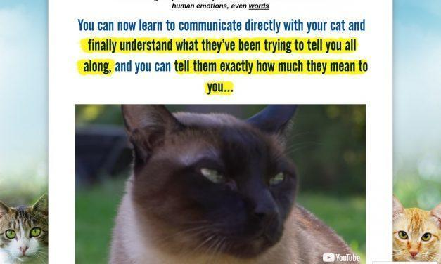 Cat Language Bible™ – Feline-Human Communication Breakthrough