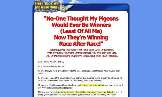 How To Race Pigeons – True Racing Secrets Revealed!